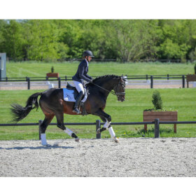 Equiline - Women's competition jacket